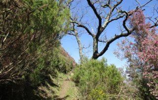 caminhada aldeia da pena serra sao macario caminhando