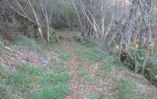 caminhada trilho do cabrito oleiros caminhando