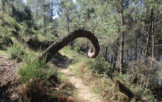 caminhada trilho aguia sarilhao vilarinho das furnas geres caminhando