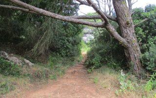caminhada palmela serra gaiteiros caminhando